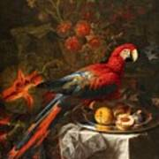 Gabriello Salci  Fruit Still Life With A Parrot Art Print