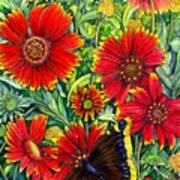 Gaillardia Art Print