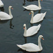 Galway Swans On The Claddagh Art Print