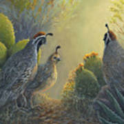 Gambel's Quail - Early Light Art Print