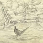Game Bird By W  Buelow Gould  C 1835  Art Print
