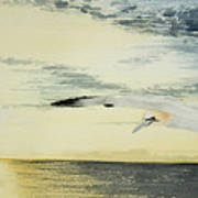 Gannet At Dusk Art Print