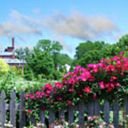Garden Fence And Roses Art Print