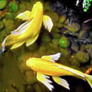 Garden Goldenfish Art Print