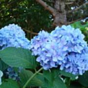 Garden Landscape Blue Hydrangeas Art Print Baslee Troutman Art Print