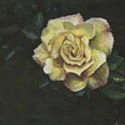 Garden Rose Art Print by Jeff Brimley
