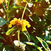 Garden Yellow Art Print