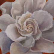 Gardenia  Bloom Art Print