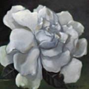 Gardenia Two Art Print