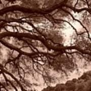 Garin Park Tree 2 Art Print