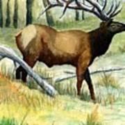 Gash Flats Bull Art Print