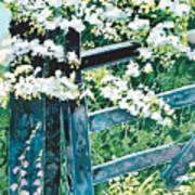 Gate And Blossom Art Print