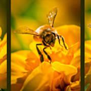 Gathering Pollen Triptych Art Print