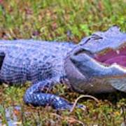 Gator Laugh Art Print