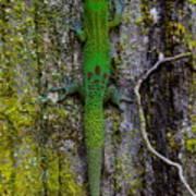 Gecko On Tree Bark Art Print
