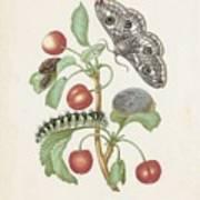 Gedaanteverwisseling Van De Nachtpauwoog  Maria Sibylla Merian  1679 Art Print