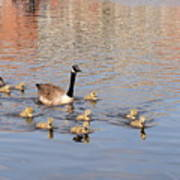 Geese And Goslings 3 Art Print