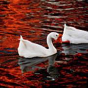 Geese At Lady Bird Lake Art Print by Mark Weaver