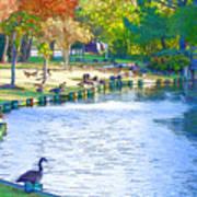 Geese In Pond 3 Art Print