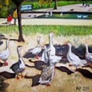 Geese In The Park Art Print