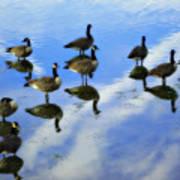 Geese Lake Reflections  Art Print