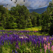 Geese Over Lupine Field Art Print