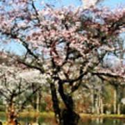 Geese Under Flowering Tree Art Print