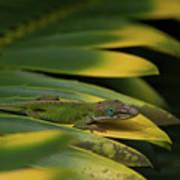 Gekco On Palm  Leaf Art Print