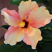 Gentle Hibiscus Art Print