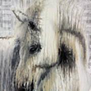 Gentle White Horse Art Print