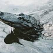 Genuine New O Alligator Art Print