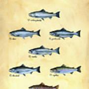 Genus Oncorhynchus Art Print by Logan Parsons