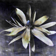 Genus Protea Art Print