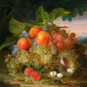 George Forster  Still Life With Fruit And A Birds Nest Art Print