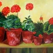 Geraniums In A Row-- Sold Art Print