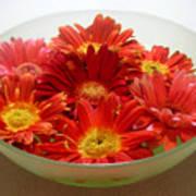 Gerbera Daisies - A Bowl Full Art Print