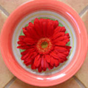 Gerbera Daisy - Bowled On Tile Art Print