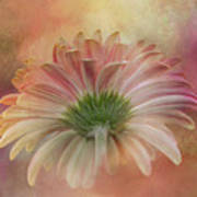 Gerbera From The Back Art Print