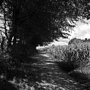 German Path Black And White Art Print