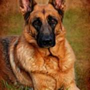 German Shepherd Dog Portrait  Print by Angie Tirado