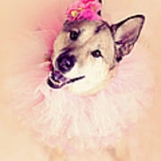 German Shepherd Mix Dog Dressed As Ballerina Art Print by R. Nelson