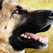 German Shepherd Portrait Art Print