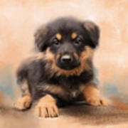 German Shepherd Puppy Portrait Art Print