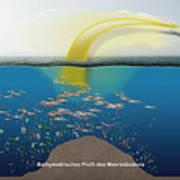 Geruchssinn Von Eissturmvoegeln - Procellariidae  Art Print