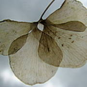 Ghost Of A Flower  Art Print