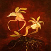 Ghost Orchids Art Print