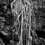Ghostly Roots - Bw Art Print