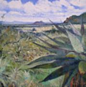 Giant Aloes At Pelegano Botswana 2008  Art Print