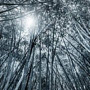 Giant Bamboo In Forest With Sunflare, Black And White Art Print