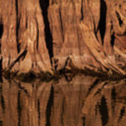 Giant Cypress Tree Trunk And Reflection Art Print